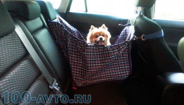 Как перевозить собак в машине